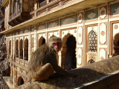 Monkey Temple or Galtaji Temple in Jaipur, India.