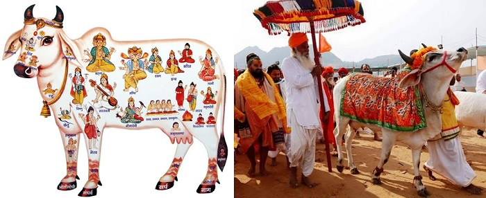 Left: Description of Cow in Vedic literature. Right: A religious procession with Cow.