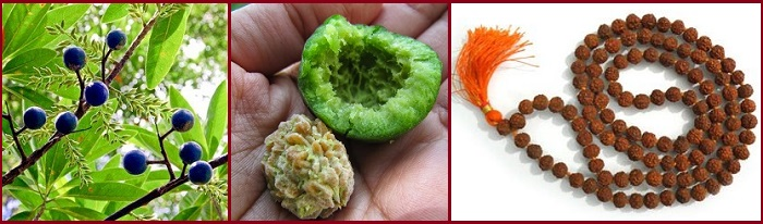 Rudraksha fruit, seed and garland