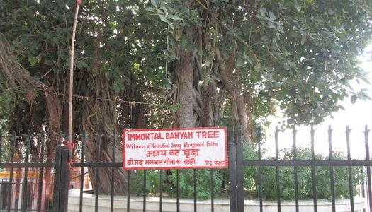 The Banyan Tree In kurukshetra from the time of Mahabharata War