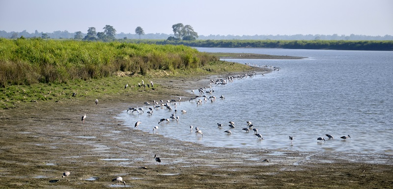 The Eastern Range of Kaziranga National Park Is famous for Bird Watching