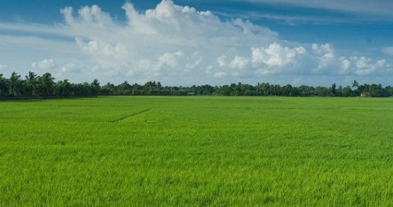 """Kuttanad also know as """"The Rice Bowl of Kerala"""". It is one of the few places in the world where farming is carried out at an altitude below the sea level."""