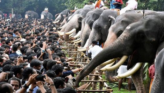 Hinduism give each individual the freedom of worship. You can worship even Elephant as shown in above Image