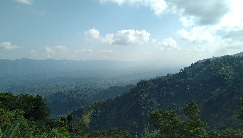 The dense jungle of Jampui Hill seen from the watch tower